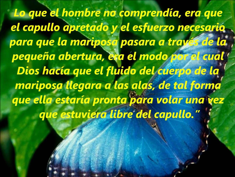 La Leccion De La Mariposa.