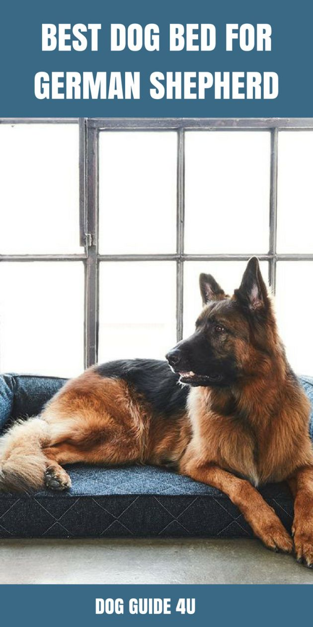 Best Dog Beds For German Shepherds Dog Bed Cool Dog Beds Dog