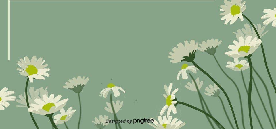 28 Gambar Bunga Aster Kartun Gambar Bunga Aster Diberbagai Kultur Kemasyarakatan Bunga Melambangkan Segala Sesuatu Yang Ada Kaitannya Deng Di 2020 Aster Bunga Kartun