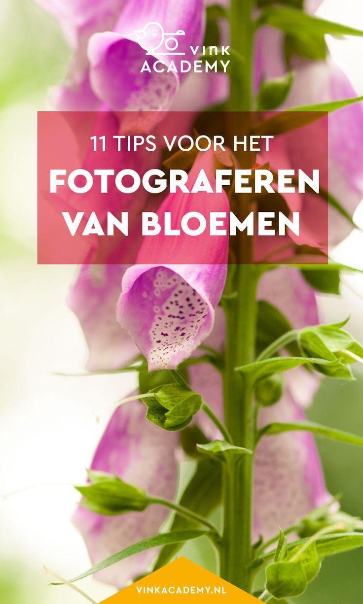 Photo of Bloemen fotograferen: 11 tips