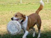 Ruff House Dog Park Rockwood Park Chesterfield County Dog Park