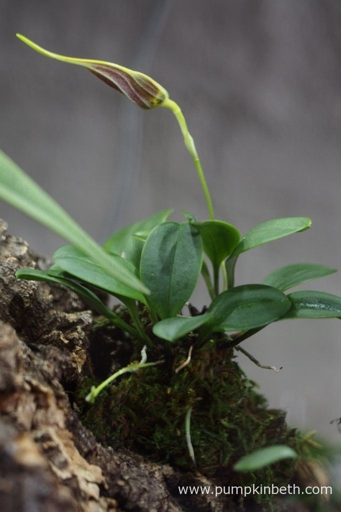 Orchid Bud Blast Orchid Flower Orchid Care Orchids