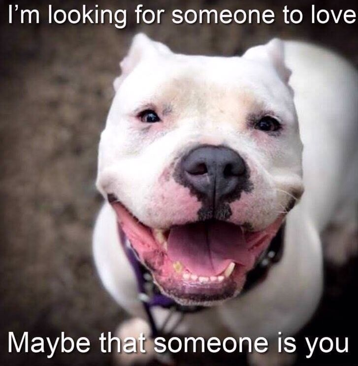Shelter Spotlight Today. Tomorrow. Forever. Dog friends