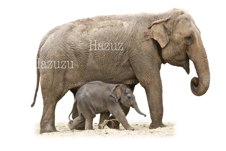 Elephant Mother Baby Png Clip Art Vintage Animal Transparent Background Digital Stamp Instant Download Collage Journal Scrapbooking In 2021 Elephant Clip Art Asian Elephant African Elephant