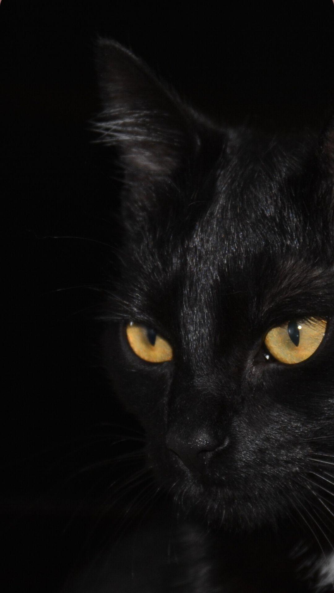 Iphone Black Cat Wallpaper In 2020 Cute Cat Wallpaper Cat Wallpaper Cute Black Cats