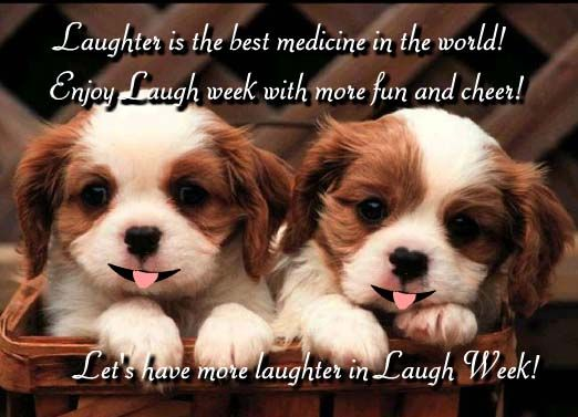laugh week 2 puppies Cute puppy wallpaper, Cute animals
