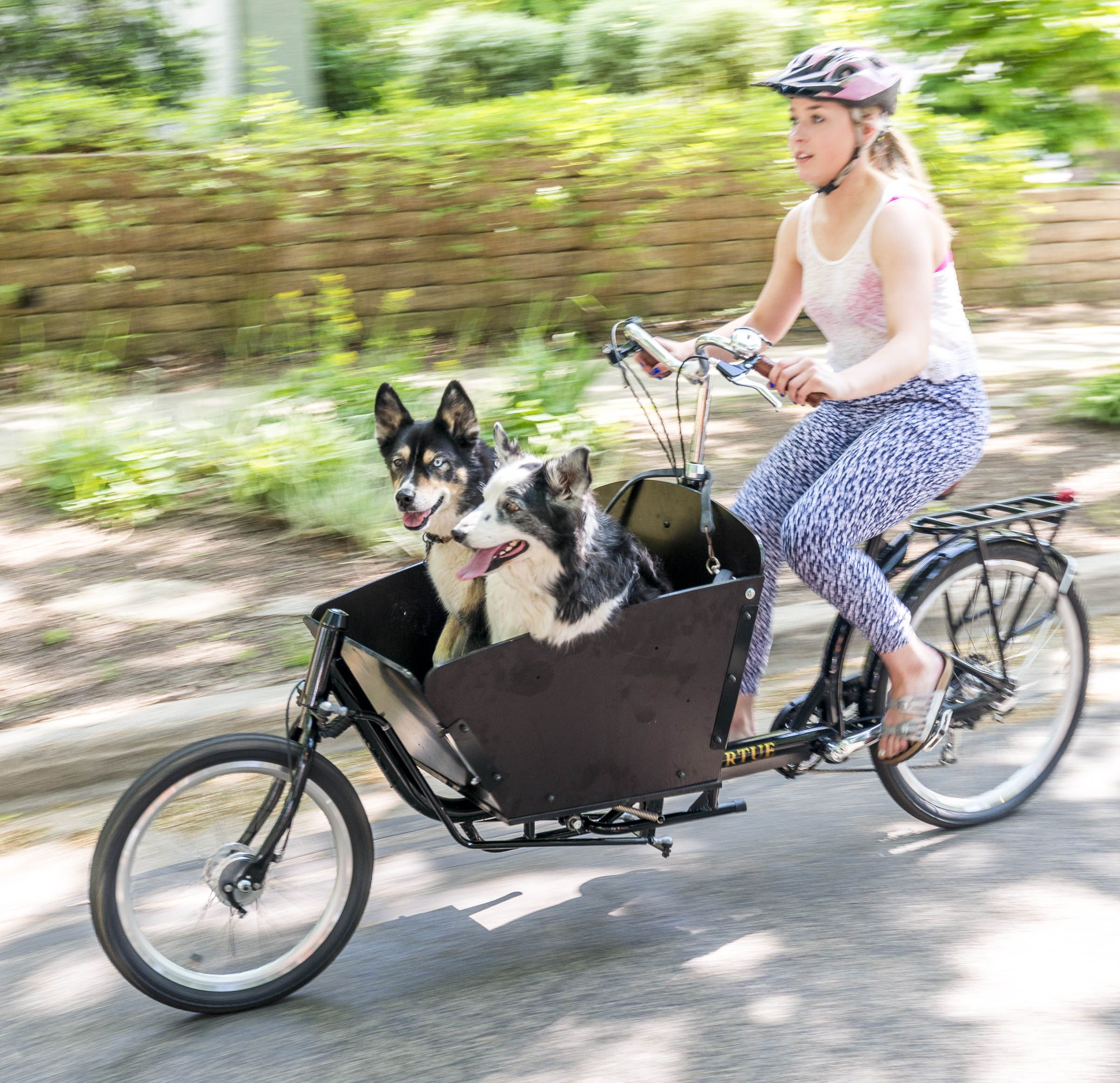 Bike Czar How To Transport Dogs By Bike Bike Riding Benefits Dog Bike Carrier Biking With Dog