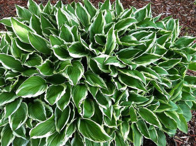 Low Maintenance Perennials For Sun And Shade Front Flower Beds