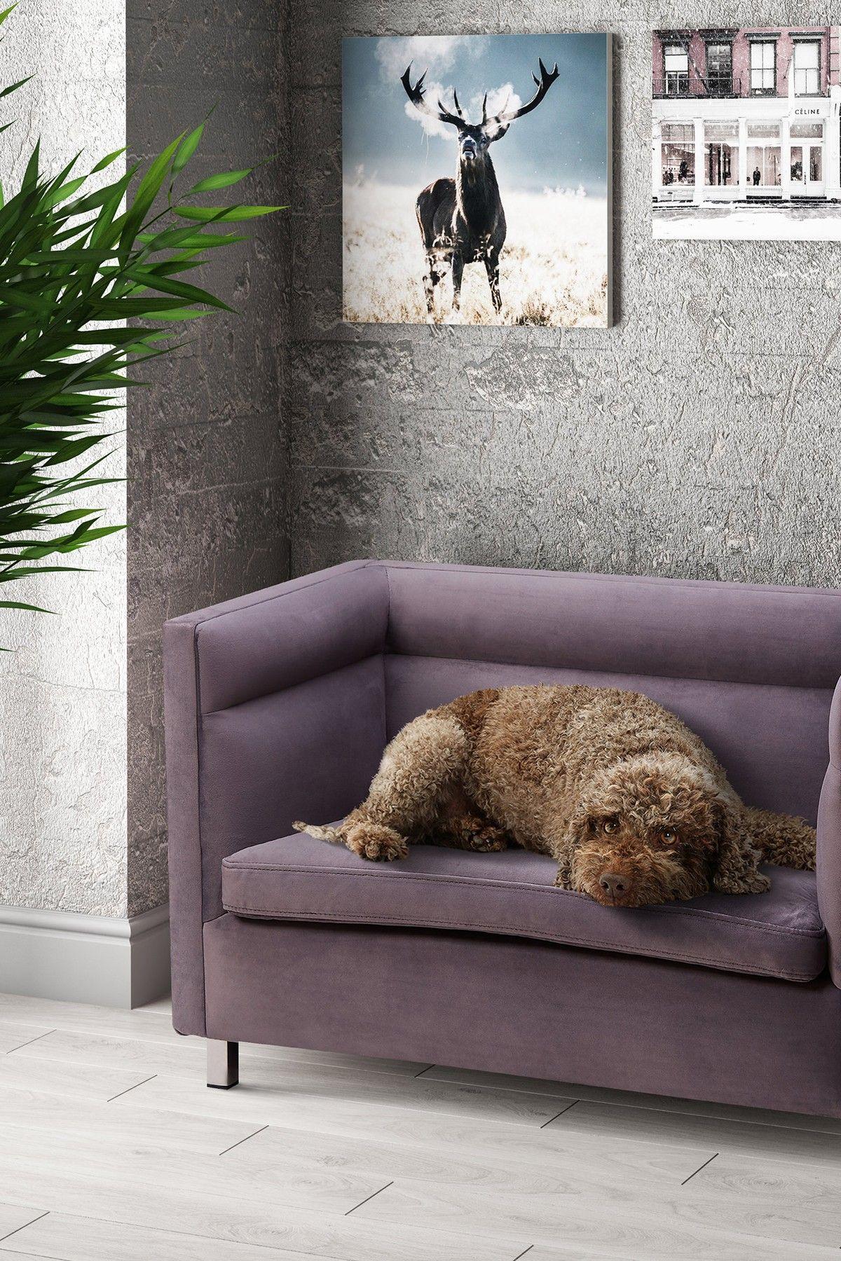 tov furniture beagle grey pet bed nordstrom rack pet chaise lounge pet bed furniture