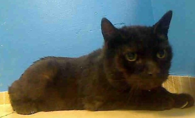**URGENT**JIMMY KILLED TODAY/ JAN 10, 2013**THURSDAY EARLY**  My name is JIMMY. My Animal ID # is A0953620.  I am a neutered male black domestic sh mix. The shelter thinks I am about 8 YEARS old.  ...See More — with Lisa Kitty Letourneau  CONTACT INFO ON FACEBOOK: DEATH ROW CATS NY**PLEASE SHARE SHARE**WE HAVE TO SAVE THESE KITTIES! THANK YOU FOR SHARING CONCERN FOR ALL THE CATS....DANA