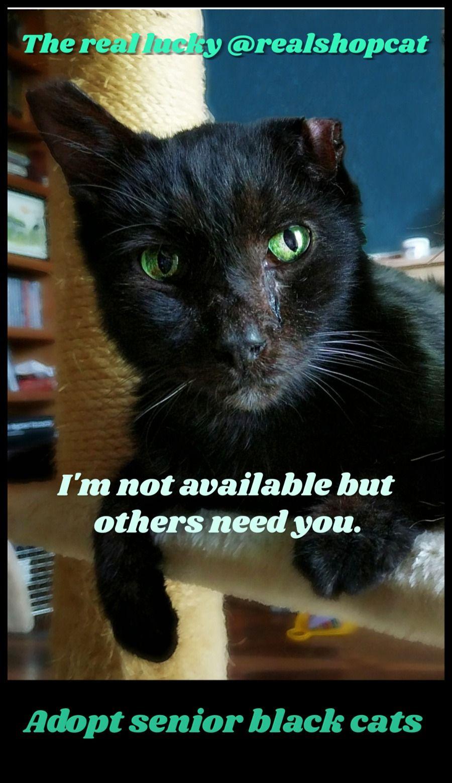 Real Shop Cat Inspires Senior Adoption Cat Wisdom 101 Everything Feline Since 2011 Cat Adoption Cats Adoption