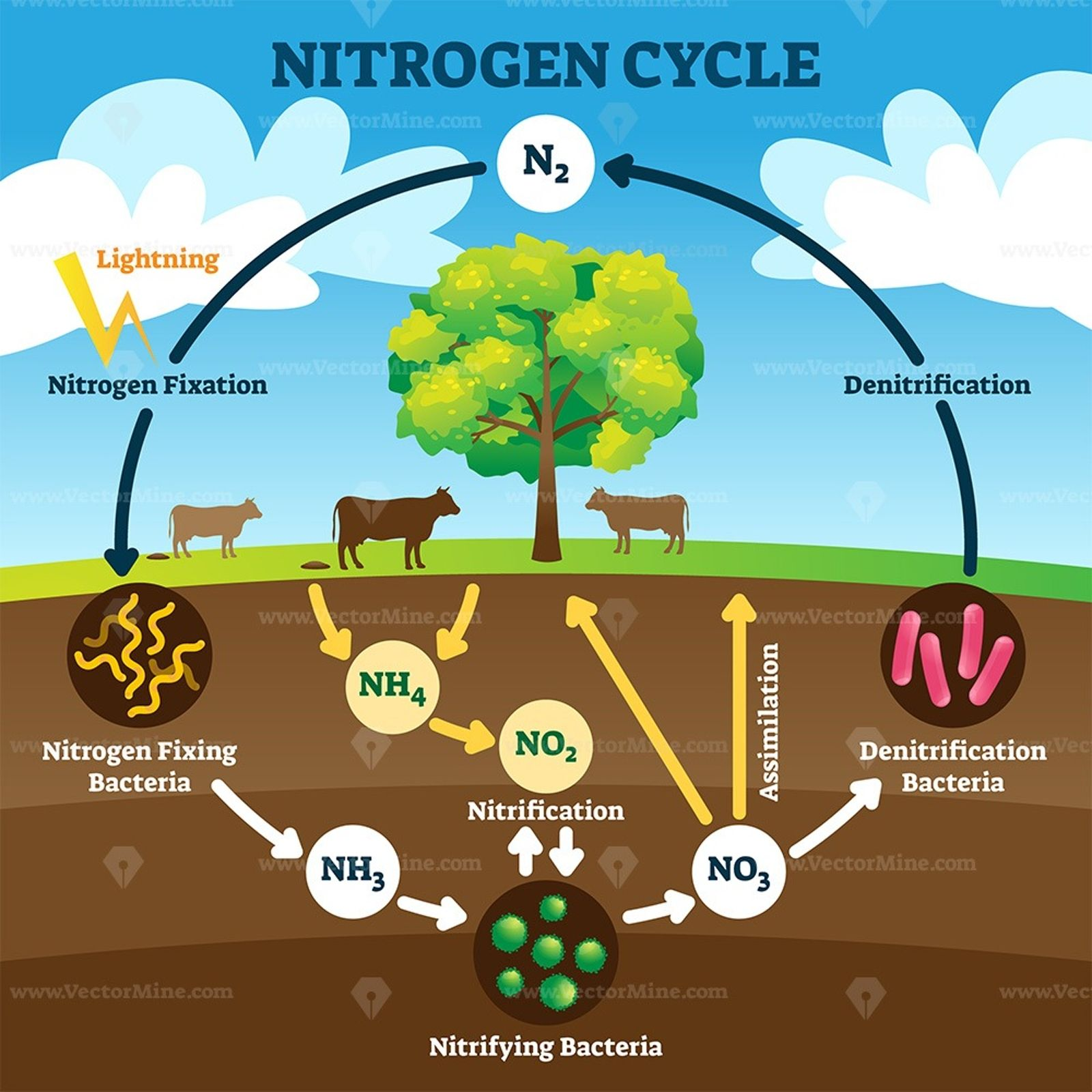 Nitrogen Cycle Vector Illustration In 2020 Nitrogen Cycle Science For Kids Nitrogen