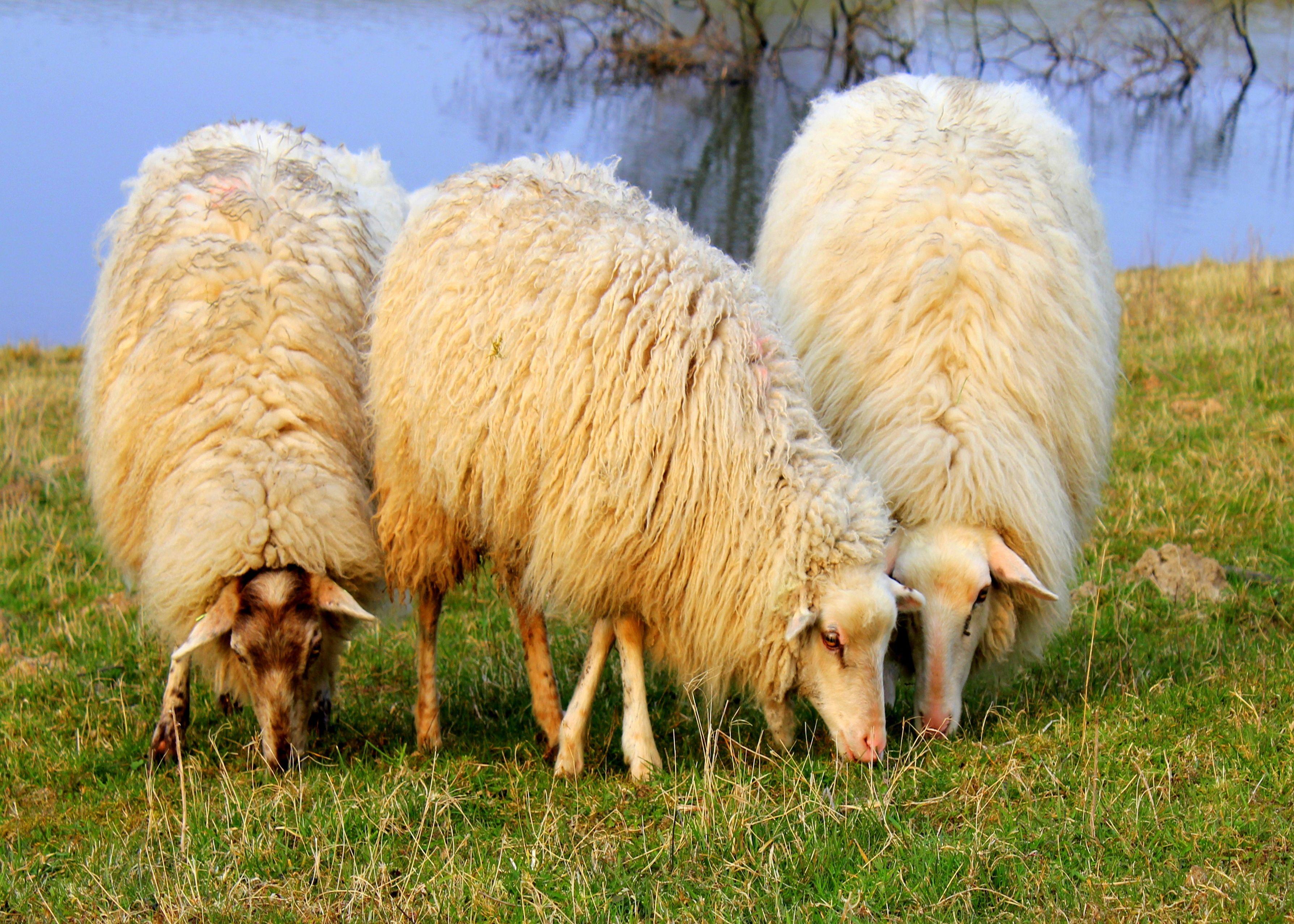 Als wenskaart te koop bij  http://Josefotografie.sendasmile.com/