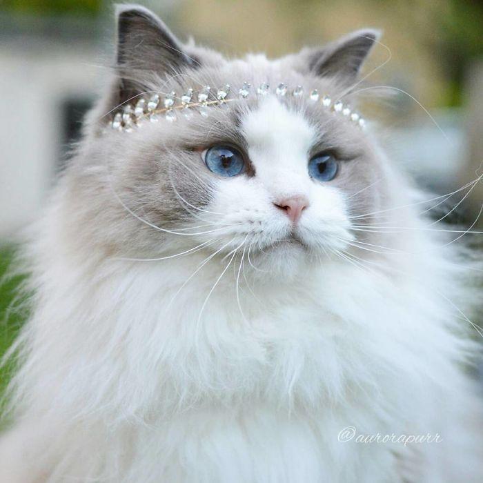 Aurora, a fofa gata princesa, adora comer, dormir e ser mimada