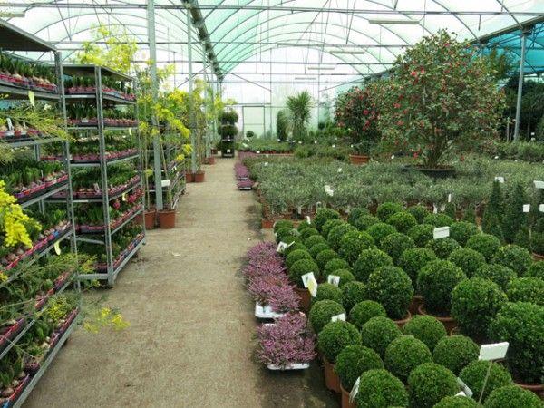 Vivero shangai madrid garden nursery pinterest - Garden center madrid ...
