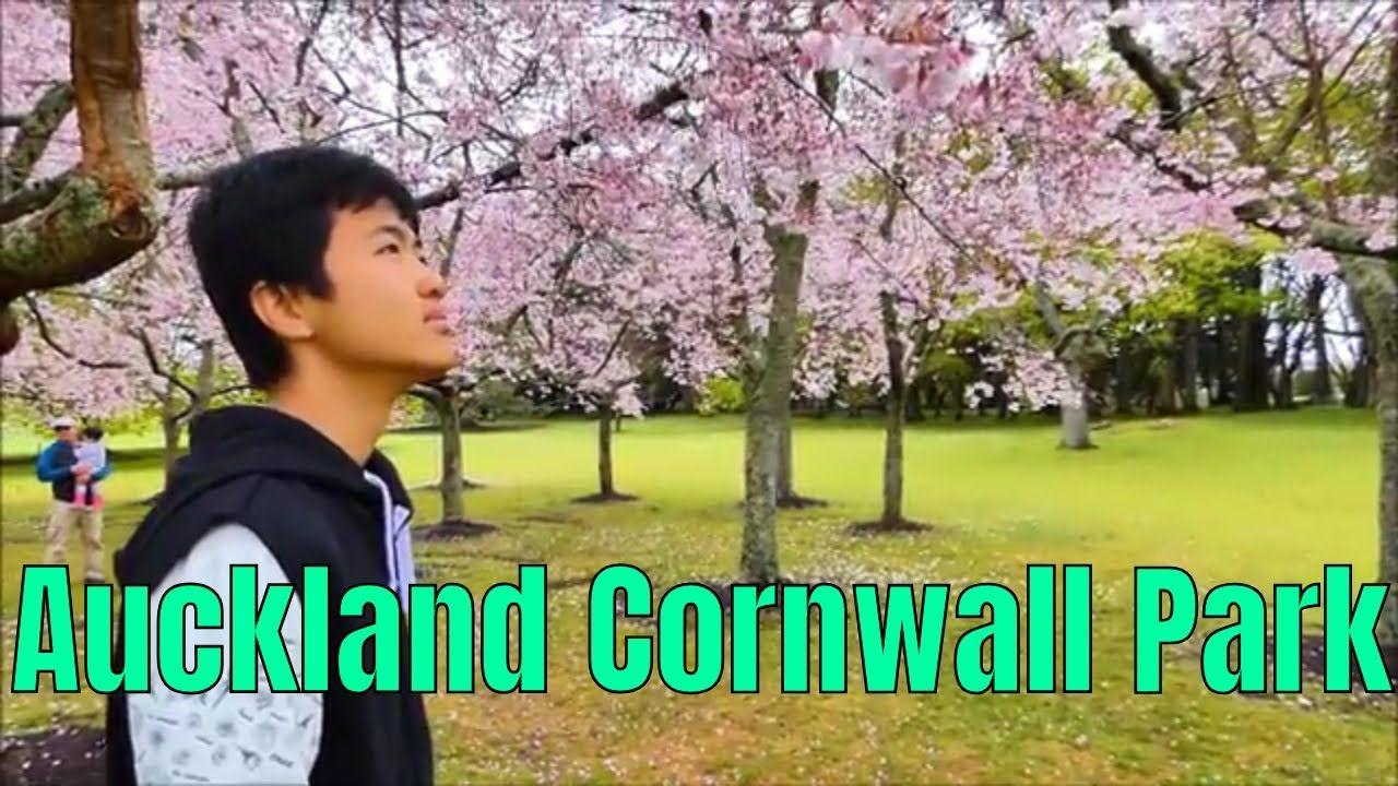 The Cherry Blossoms Auckland Cornwall Park Auckland Auckland City Park