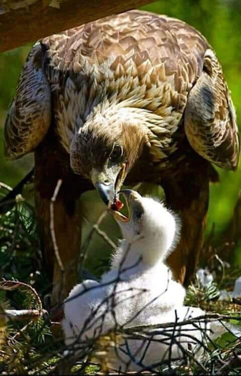 Épinglé par vero sur oiseaux   Pinterest   Oiseaux, Animaux et Animaux  sauvages 1e344f6291e