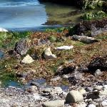 Monterey Peninsula Recreational Trail