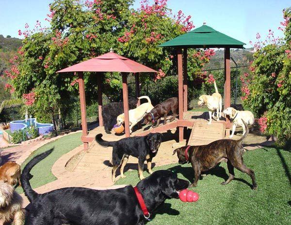 About Canyon View Ranch for Dogs in Topanga Canyon Dog