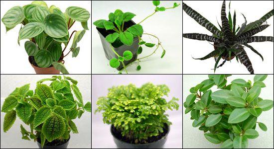 Vivarium Tropical Plants For 55 Gallon Enclosure Cresties Gecko