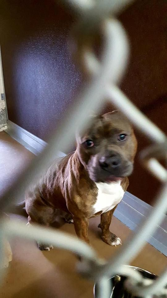 Norwich Animal Control Added 2 New Photos Yesterday At 3 27pm