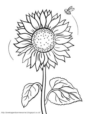 Aneka Gambar Mewarnai Gambar Mewarnai Bunga Matahari Untuk Anak Paud Dan Tk Pelajaran Menggamba