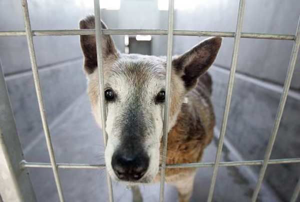 Pet stores without puppy mills Dog love, Dogs, Animals