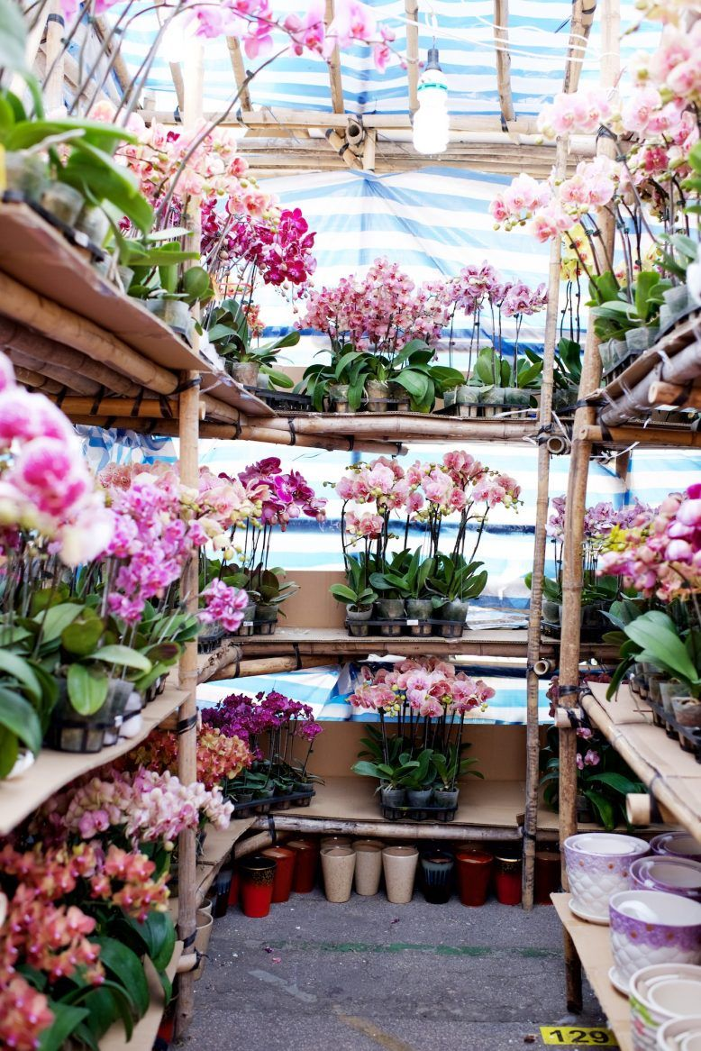 Chinese new year in hong kong gardening pinterest flower