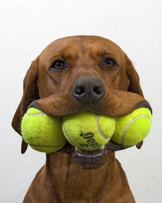 La ultima vez que paseo al perro por las pistas de tennis!