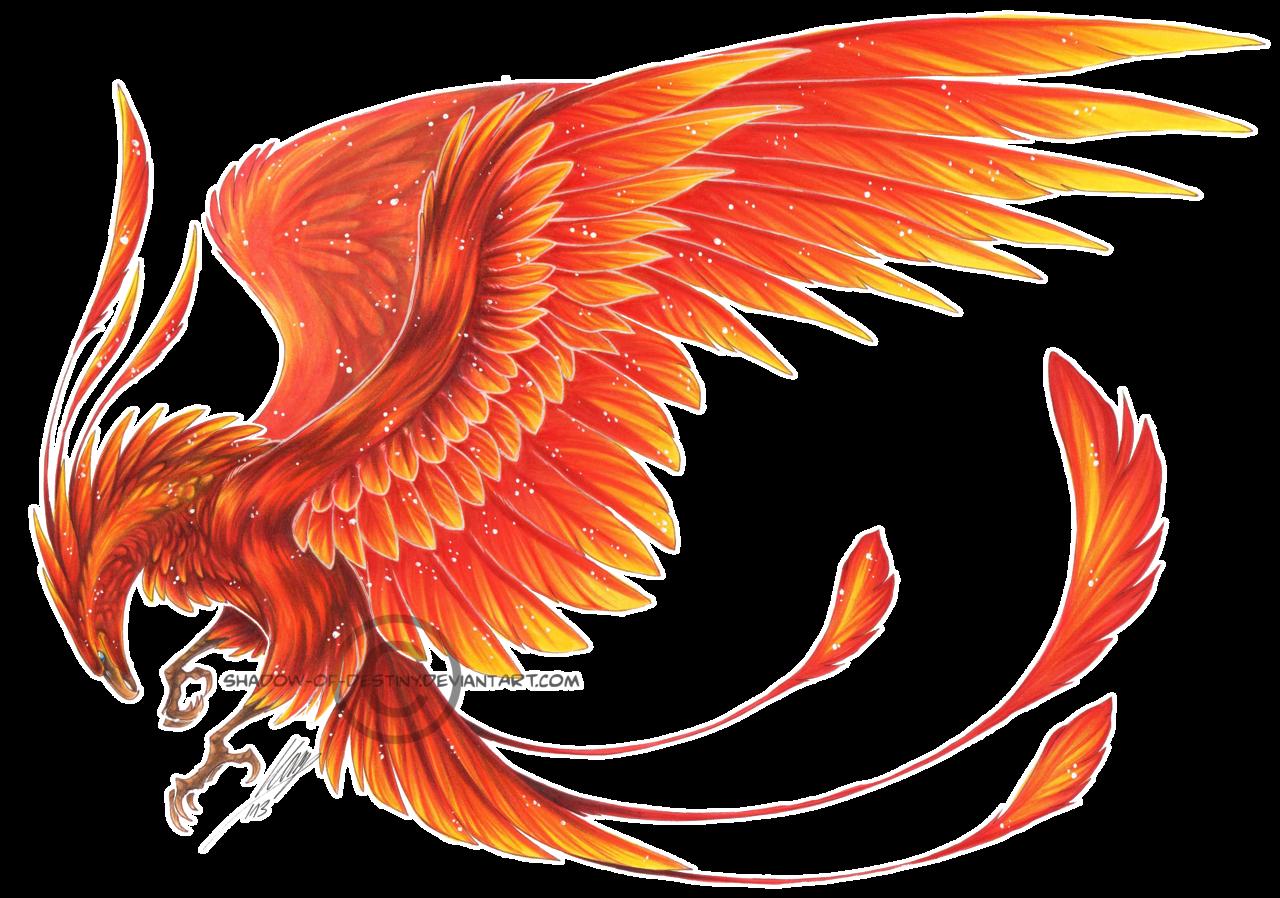 Fenix Bird Images