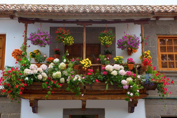 a 17 legjobb ötlet a következőről: pflegeleichte balkonpflanzen a, Hause und Garten