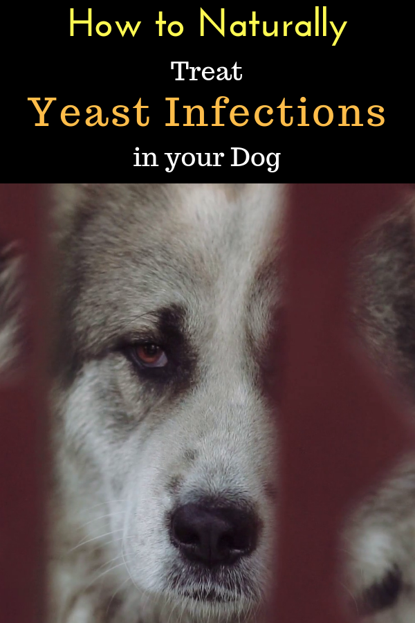 How To Get Rid Of Yeast In My Dog
