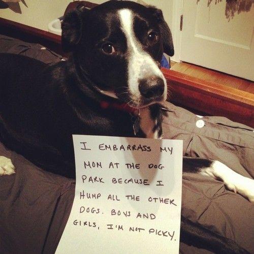 55f44f25dedd6777af86871dea415481 - How To Get A Boy Dog To Hump You