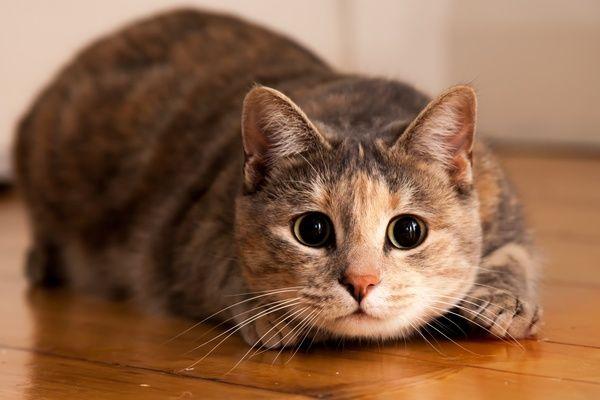 Feline Behavior: Are Female Cats Better Hunters  http://andmycat.com/2014/01/are-female-cats-better-hunters.html