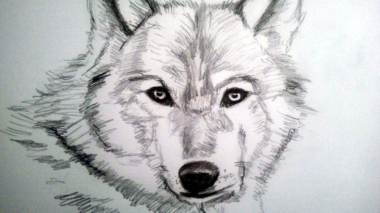 How To Draw A Realistic Wolf With Pencil Step By Step How To Draw Hairy Animal Drawings Drawings Cute Disney Drawings