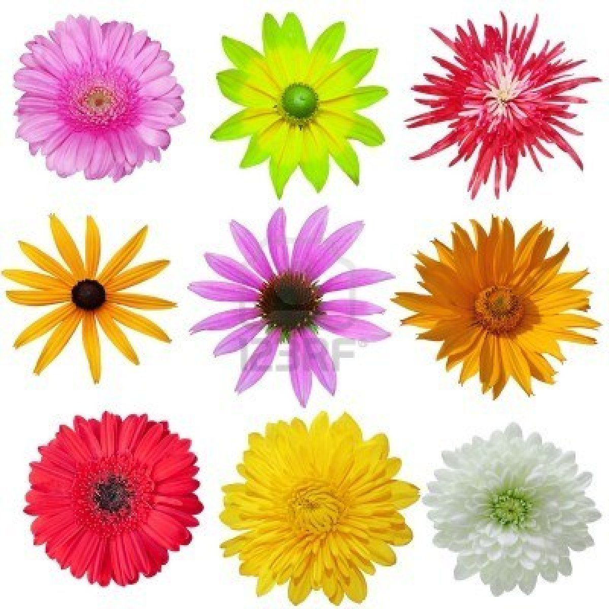 Wild Daisy Flowers Daisies Pinterest Daisy Flowers