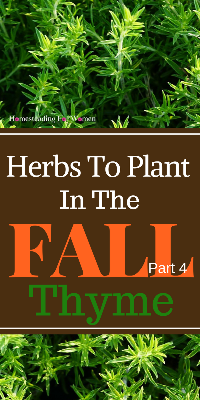Herbs To Plant In The Fall Thyme. This is part 4 of a 6 part series ...