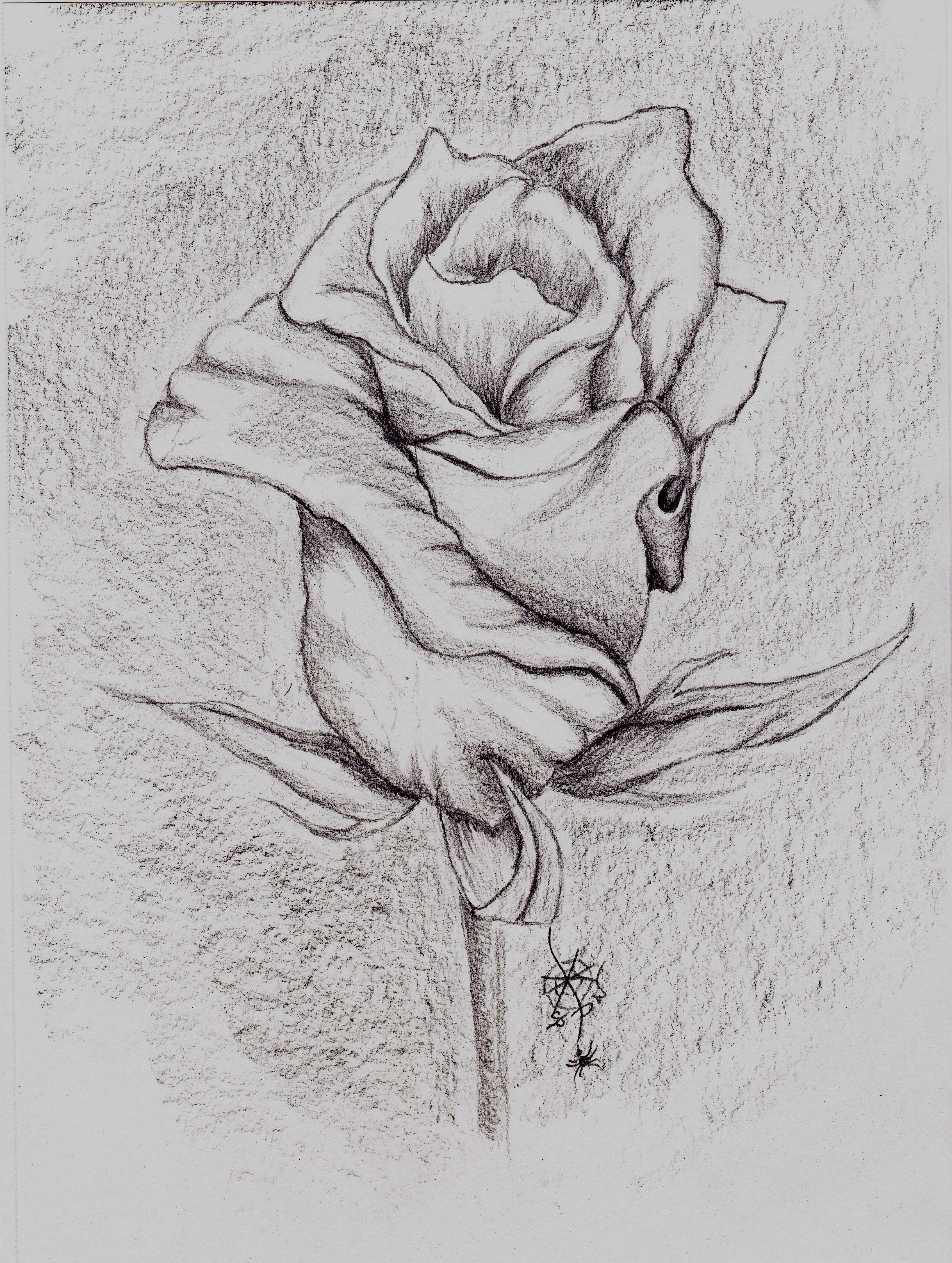 Розы картинки красивые рисовать