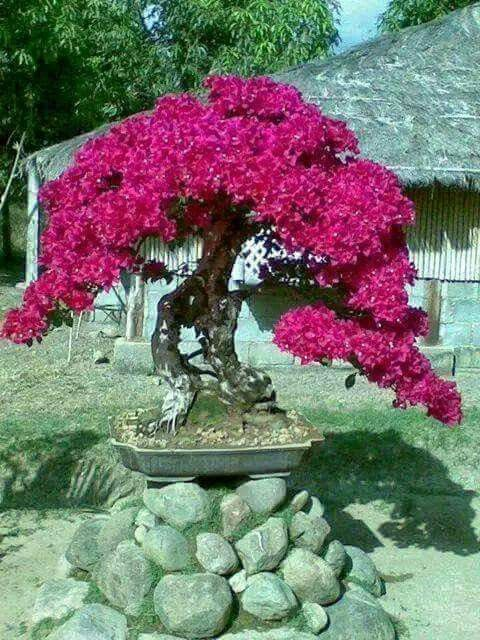 Flores cascadas y jardines Pinterest