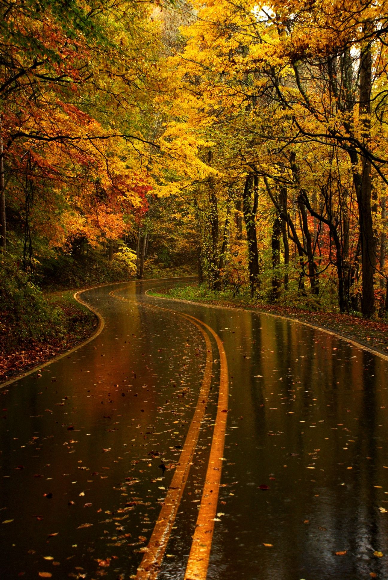 After A Good Rain, Yellow Leaf Road, North Carolina. North Carolina And Its