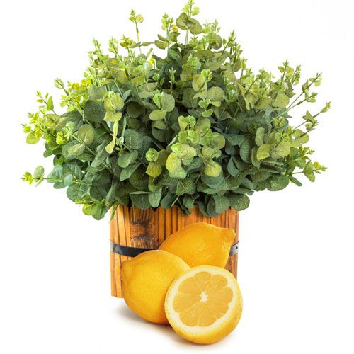 Lemon Eucalyptus Essential Oil   Bramble Berry® Soap Making Supplies