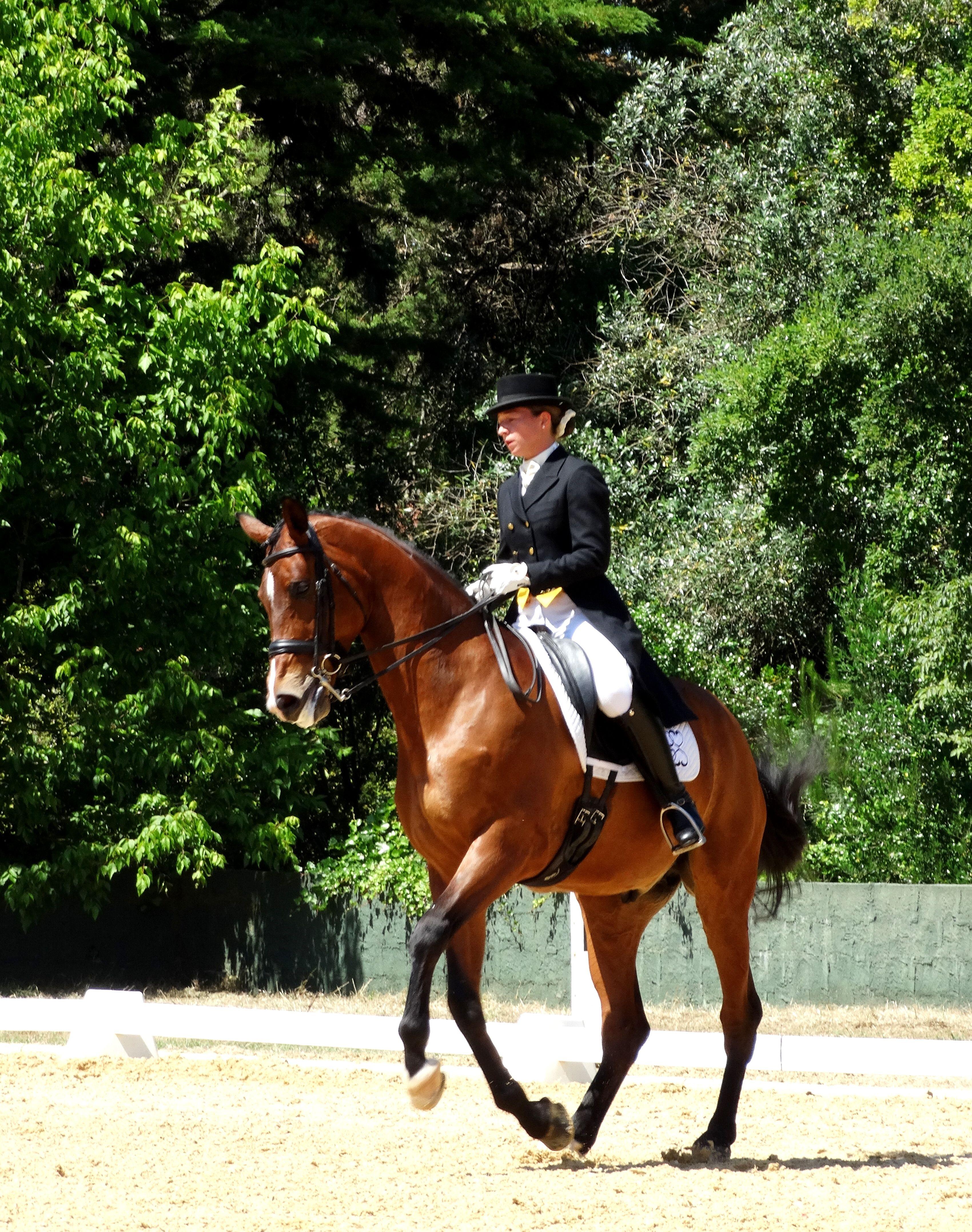 This week-end, our rider Morgane and her horse Basco du Feuillard participated to II Jornada da Taça de Portugal de Dressage ! #competition #horse #dressage #quintam
