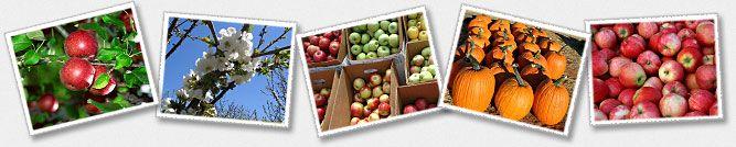 Carter Mountain Orchard - Fruit Picking in Charlottesville, VA