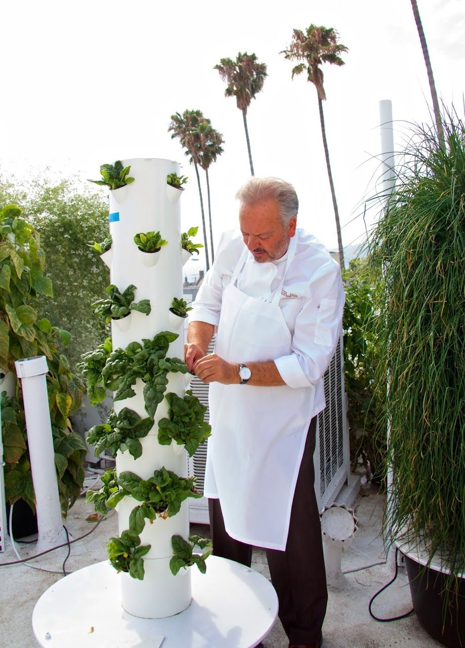 Future Growing Tower Gardens At Rivera Restaurant Los