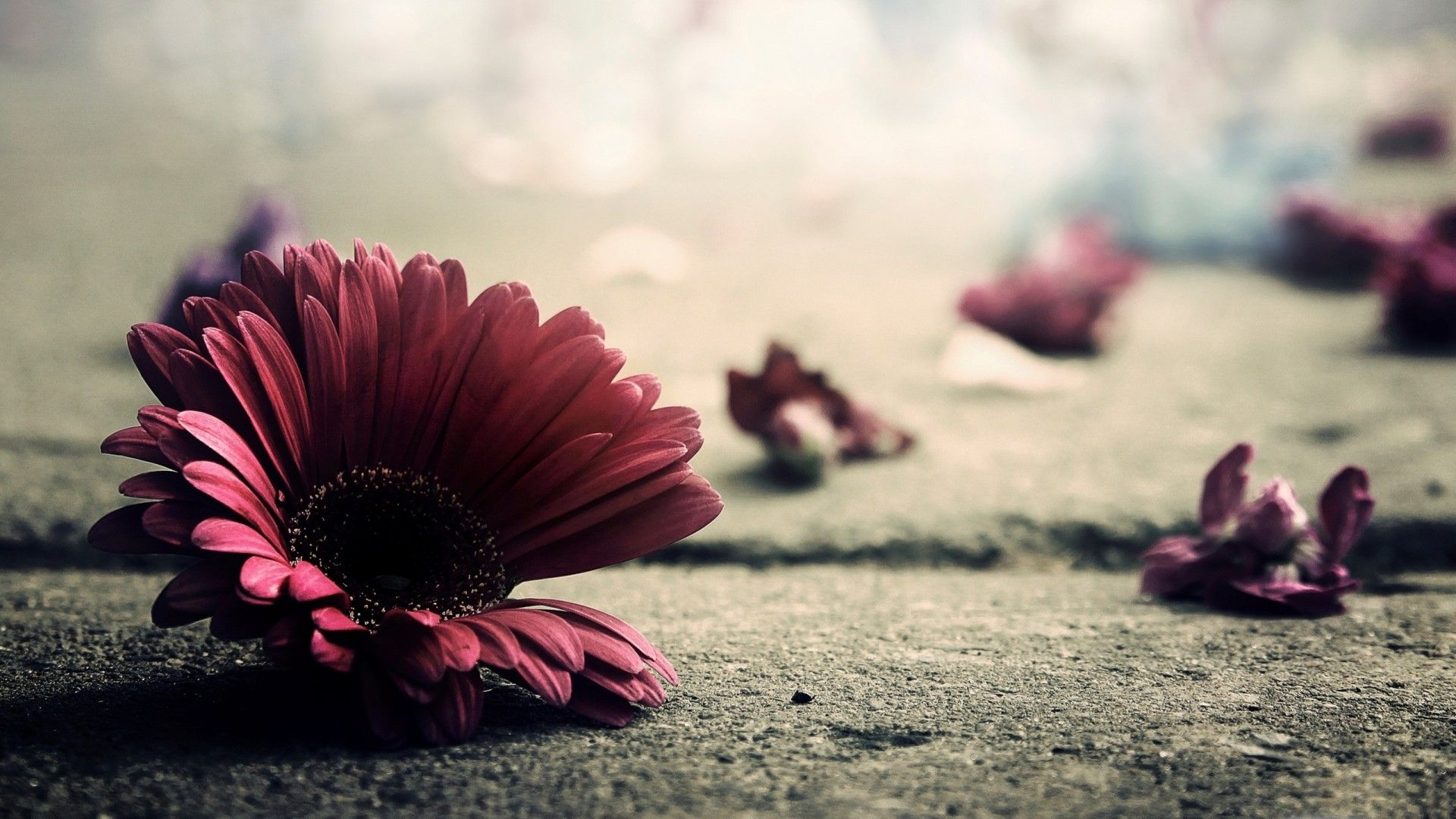 Vintage wallpaper flowers  20 VINTAGE WALLPAPERS FOR RETRO LOOK | Vintage desktop wallpapers ...