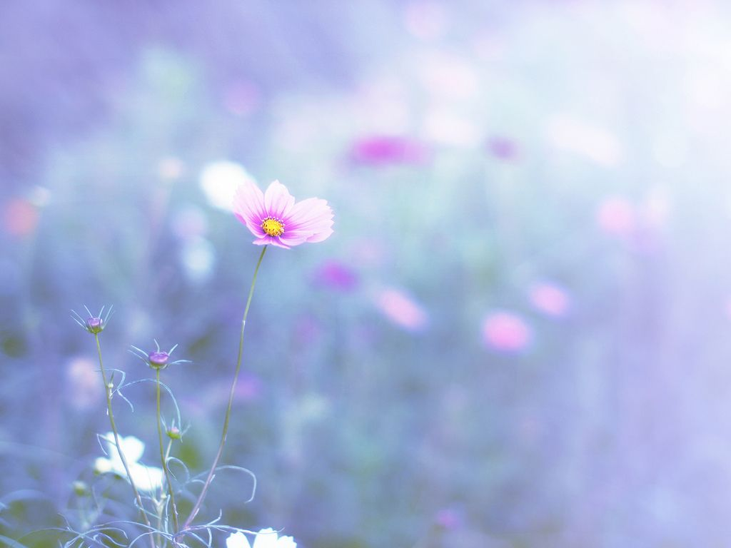 Blue and pink flowers #nature #naturephoto #naturelovers #flowerlovers #beautiful #bloom #flower