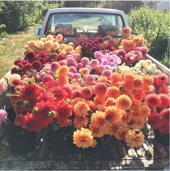Truck Filled With Dahlias Floretflower Flowers Floral Flower Truck Beautiful Flowers Flower Farm