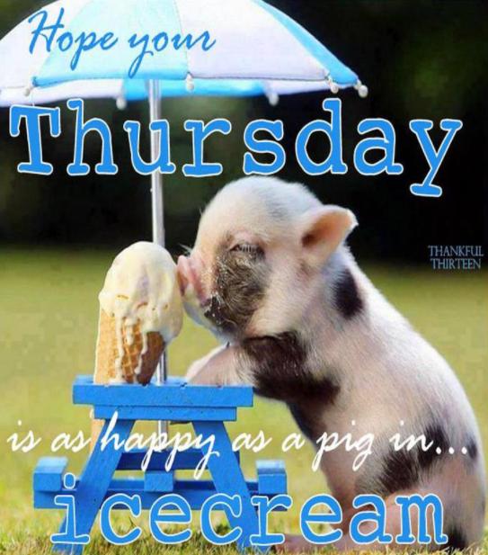 20 Best Happy Thursday Meme Days Of The Week Happy Thursday
