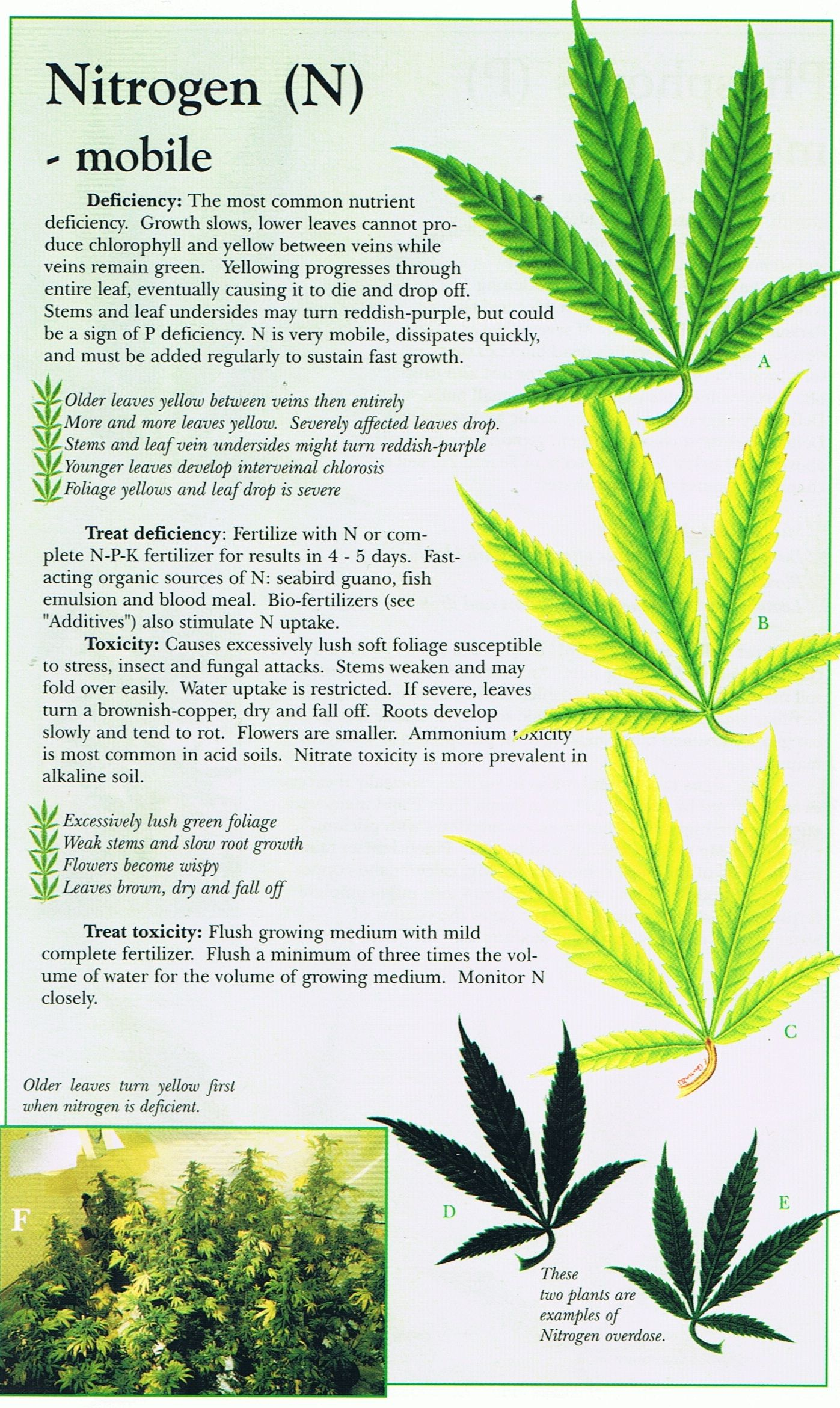 Cannabis deficiency guide marijuana weed problems leafs yellow marijuana nutrient deficiencies why n p k matters for great plant health nvjuhfo Image collections