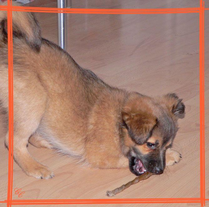 Backen Fur Hunde Hunde Hundegesundheit